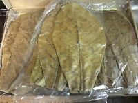 30 Stück Seemandelbaumblätter 20-25cm Terminalia Catappa Leaves