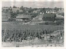KENT c. 1940 - Cultures de Houblon Séchoirs Angleterre - DIV 7334