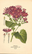Antique (Pre-1900) Original Botanical Art Prints