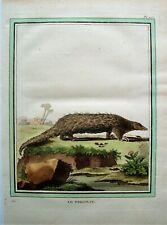 Antique Pangolin Print: Hand Colored Buffon Print: Buffon: Paris 1786