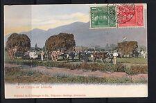 CHILE En El Campo de Limache USED Ed. Kirsinger & Cia.