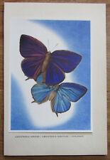 Amblypodia Aexone - Druck Kunstblatt Schmetterling Butterfly Linsenmaier