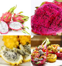 200pcs 4 Kind Mixed Rare Pitaya Dragon Fruit Seeds Plants Seed Home Garden AZ018