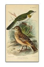 270 Antique British Birds Books on DVD Bird Natural History Wild Eggs Species C1