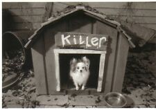 Ansichtskarte: kleiner Hund namens Killer in seiner Hundehütte - La Terreur