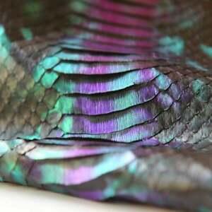 Elaphe Carinata Snake Skin Hide Leather Snakeskin Deadly Green