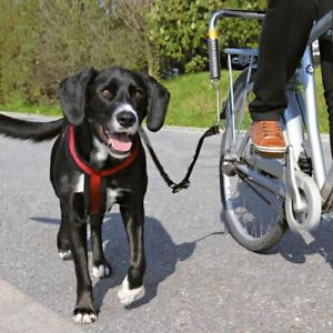 Dog Biker Set Brace and Lead with Reflective Strips Cycle with Dog Safely