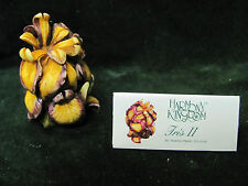 Harmony Garden - Iris Ii- Hg5Ir