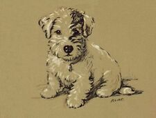 Sealyham Terrier Albert - Lucy Dawson Dog Print - MATTED