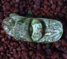 "NEW Gasteria clone 83 ""YURI GAGARIN"" from G.Sparkman USA white variegated"