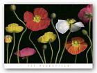 Poppy Garden II Pip Bloomfield Art Print 24x36