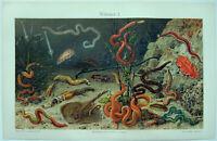 Sea Worms - Original 1908 Chromo-Lithograph by Meyers. Antique