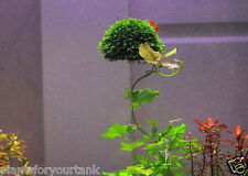 Floating ball for growing moss