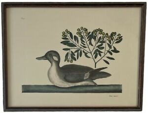 """VINTAGE HAND-COLORED ETCHING """"ANAS MINOR"""" The Little Brown Duck By MARK CATESBY"""
