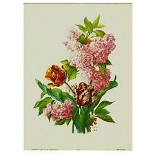 Flowers by Seguy- #914 - Individual Full Colour Vintage Lithoprint
