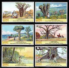 Unusual Trees Cards Set Liebig 1935 Forestry Mangrove California Africa Arbres