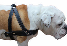 """Pulling Leather Dog Harness 1.5"""" wide Black 35""""-39.5"""" Chest Doberman Cane Corso"""