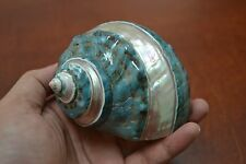 "PEARL GREEN MOTHER OF PEARL BANDED TURBO SEA SHELL HERMIT CRAB 3 1/2"" - 4"" #7131"