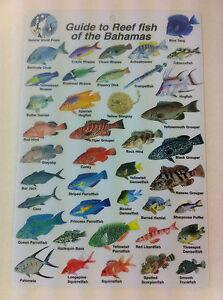 Guide to Reef Fish Bahamas ID Card Travel 6x9 B205