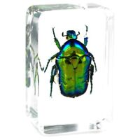 Green Chafer Beetle Insect Specimen Clear Resin Paperweight Collection Decor.