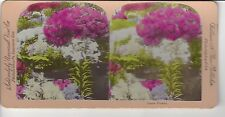 Easter Flowers, Universal View Co, Vintage  Stereoview
