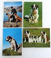 Schweiz Postkarten Lot 4x mit Hund Dog Bernhardiner St.-Bernhard Chien Barry