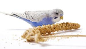 *Caged Bird Millet Sprays Sprigs (5 x Sprays of Millet) Canary Budgie Parrot