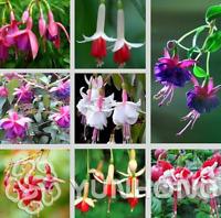 100 PCS Seeds Fuchsia Bonsai Flowers Lantern Begonia Flowers Plants Garden NEW R