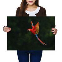 A2 - Macaw Bird Tropical Jungle Poster 59.4X42cm280gsm #2770