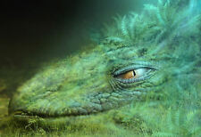 Framed Print - Green Dragon Laying in Grass & Ferns (Picture Poster Mythology)