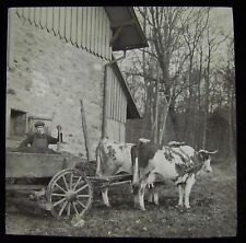 Glass Magic Lantern Slide COW CART BADEN DATED MARCH 1911 SWITZERLAND