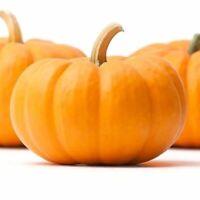 Everwilde Farms Mylar Seed Packet 10 Organic Jack Be Little Pumpkin Seeds