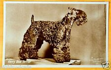 Kerry Blue Terrier dog Photo Postcard Guy Wilters Study 1920's rppc
