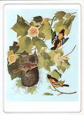 Baltimore Oriole -1979 Beautiful Colour Vintage Bird Print by John James Audubon
