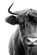 Cow Wildlife Nature Highland Black & White Quality Art Canvas Print A3