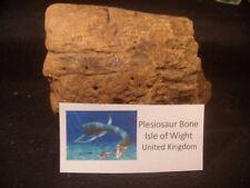 Dinosaur Bone Plesiosaur Beautiful Bone Isle of Wight, United Kingdom Unique