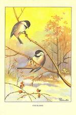 Antique Vintage Scarce Bird Print ~ Chickadee