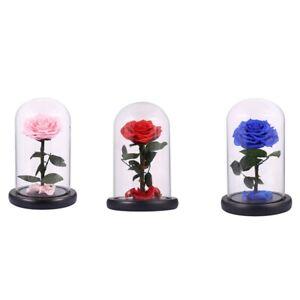 Glass Cover Fresh Preserved Rose Flower Barbed Rose Flores For Wedding Mar S7U3