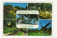 Bristol Zoo Gardens Postcard 447a