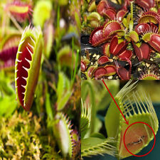 Lots 40 pcs/bag Carnivorous Plant VENUS FLY TRAP Seeds With Care Instructions