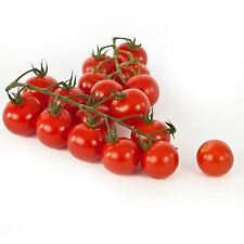 Piccolo Tomatoes  Intensely Juicy  60-Finest Seeds  Rich Flavour / UK SELLER*