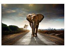 Bild Leinwandbilder Canvas Elefant Afrika Walking Elephant A05327