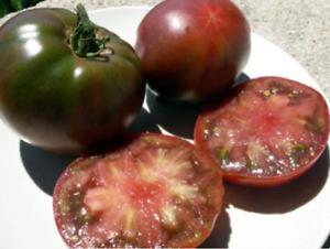 10 graines Tomate Noire de Crimée peu sensible sécheresse rustique mi saison