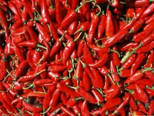 Szegedi Spice Paprika - Chili - Sweet - 5+ seeds - ORIGINAL HUNGARIAN!