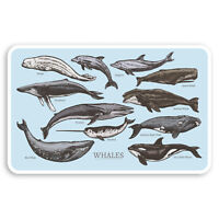 2 x 10cm Whale Drawings Vinyl Stickers - Marine Life Science Fun Sticker #30046
