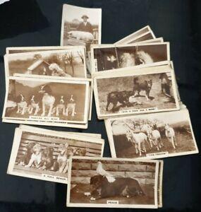 Selection Of J Millhoff De Reszke Real Photograph Cigarette Cards
