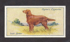 Rare 1936 UK Dog Art Full Body Portrait Ogden's Cigarette Card RED IRISH SETTER