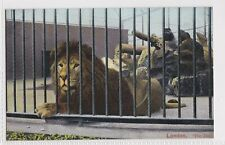 g animals pet animal old picture postcard collecting england lion london zoo