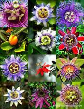RARE PASSIFLORA MIX passion fruit exotic edible tropical flowering vine 15 seeds