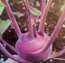 Organic Purple Vienna Kohlrabi NON-GMO 50+ Vegetable Seeds Great raw or cooked!